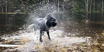 image: Regn, regn og atter regn