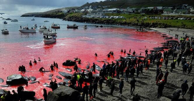 Hetser Norge med blodig video
