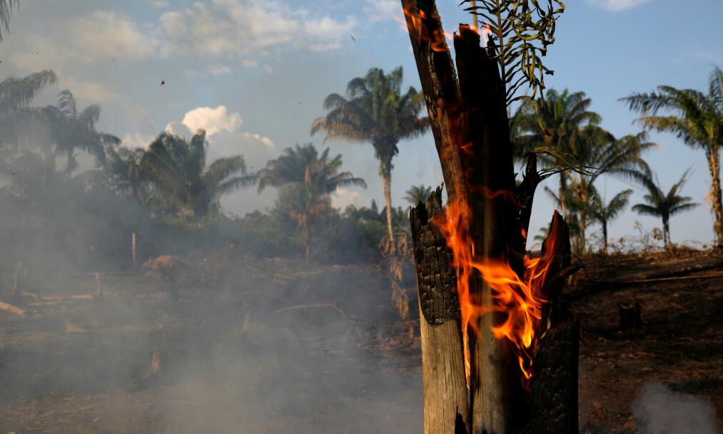 <strong>REKORDMANGE SKOGBRANNER:</strong> I fjor ble det registrert i underkant av 40 000 skogbranner i Amazonas-regnskogen. Hittil i år er det blitt registrert over 72 000 skogbranner. Foto: Bruno Kelly / Reuters / NTB scanpix