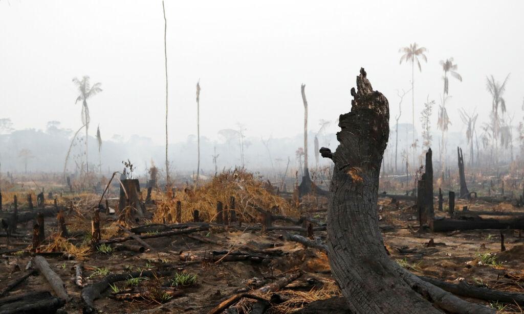 image: Oljefondet har investert milliarder i selskaper som kan skade Amazonas
