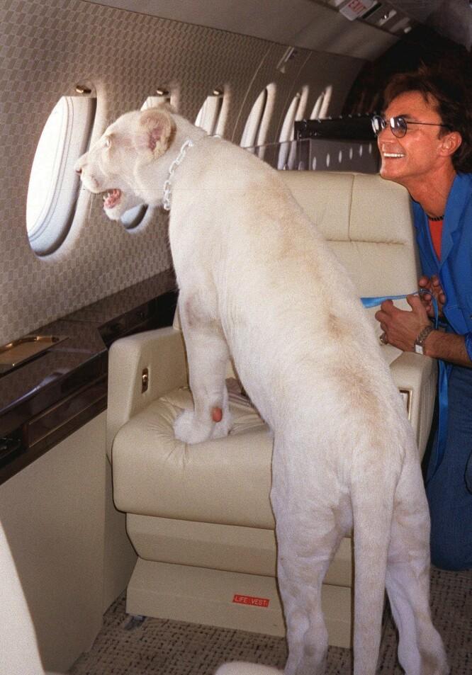 BEREIST KATT: Roy Horn i privatfly med en av duoens hvite løver i kabinen. FOTO: NTBScanpix