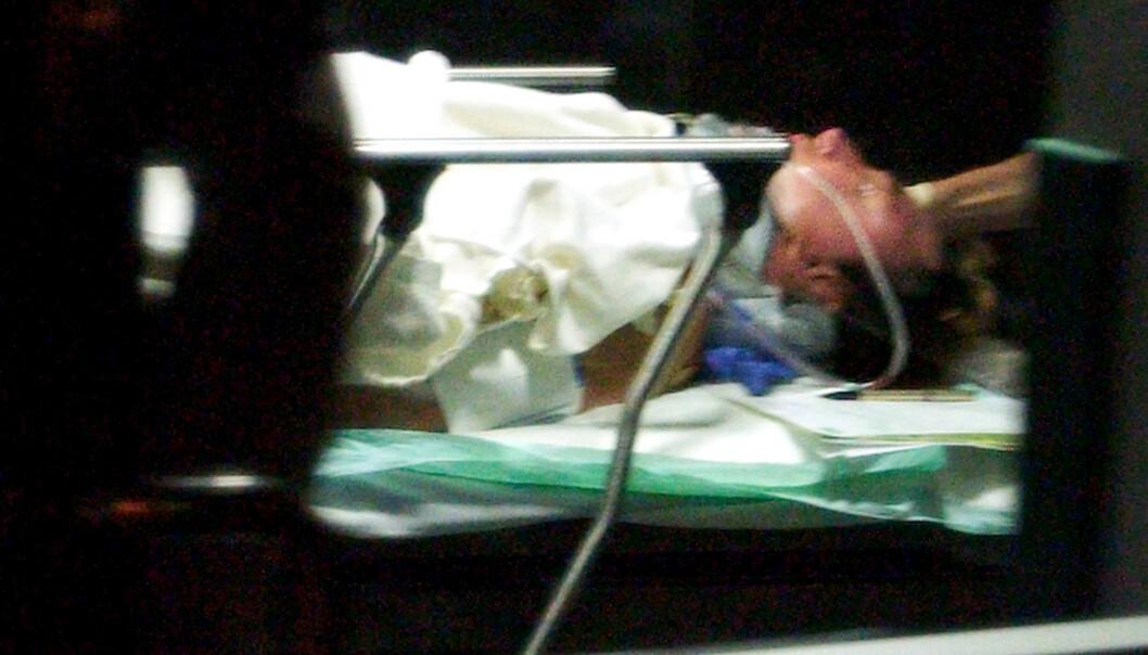 KRITISK: Roy Horn på vei til sykehuset, etter at tigeren Mantacore bet ham i hodet og trakk ham av scenen med tennene. FOTO: NTBScanpix