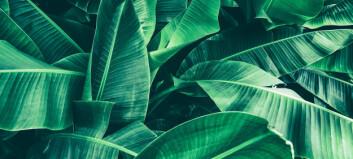 7 vanlige spørsmål om planter