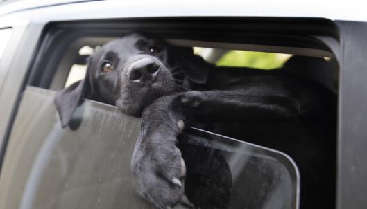 Veterinærhøgskolen: Kan verken bekrefte eller avkrefte om hundesykdommen er smittsom