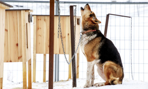 image: Den mystiske hundesykdommen: Advarer mot råd på sosiale medier