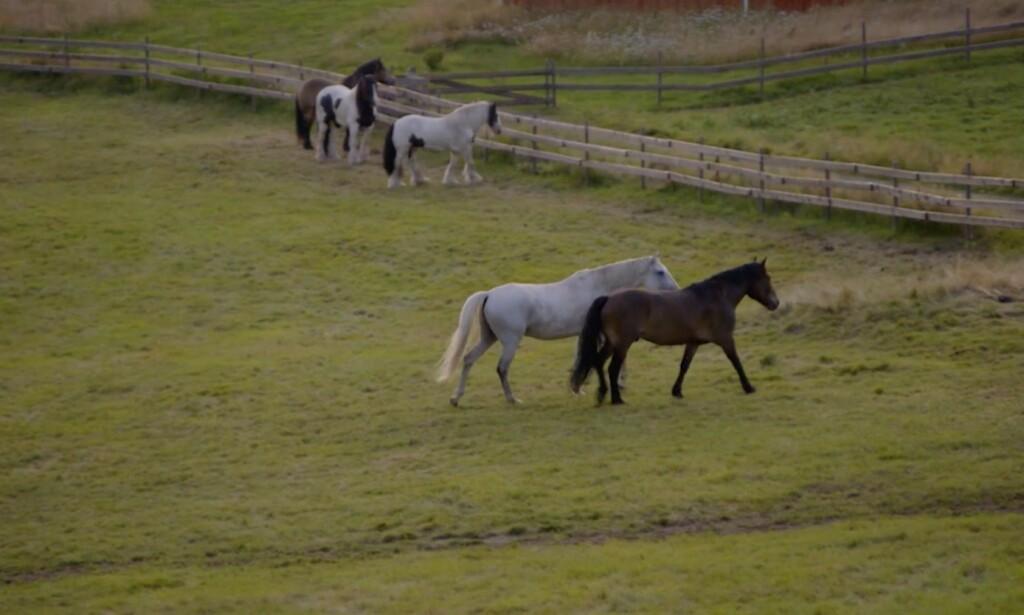 Hestene symboliserer shæstepar i gamledar. Foto: TV2