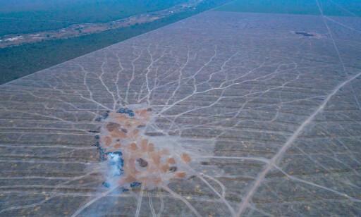 ARR I LANDSKAPET: Store skogsområder ryddes for å gjøre plass til soyaplantasjer. Foto: Mighty Earth