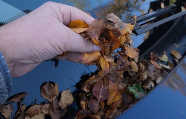 LØV GIR DYRE SKADER: Høstløv som tetter igjen vannkanaler, fører til at vann kan trenge inn i motorrom og ødelegge elektronikk for 20.000-30.000 kroner. Foto: Rune Korsvoll