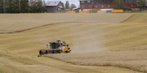image: Regjeringen dropper beredskapslager av korn