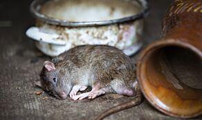 image: - Nå kommer musene og rottene inn