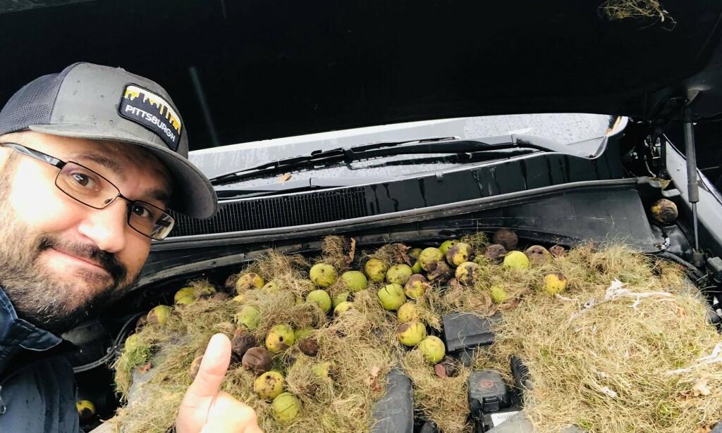 SJOKKERENDE SYN: Etter å ha parkert bilen sin over helga fant Holly og Chris Persic 200 valnøtter under panseret. Foto: Privat