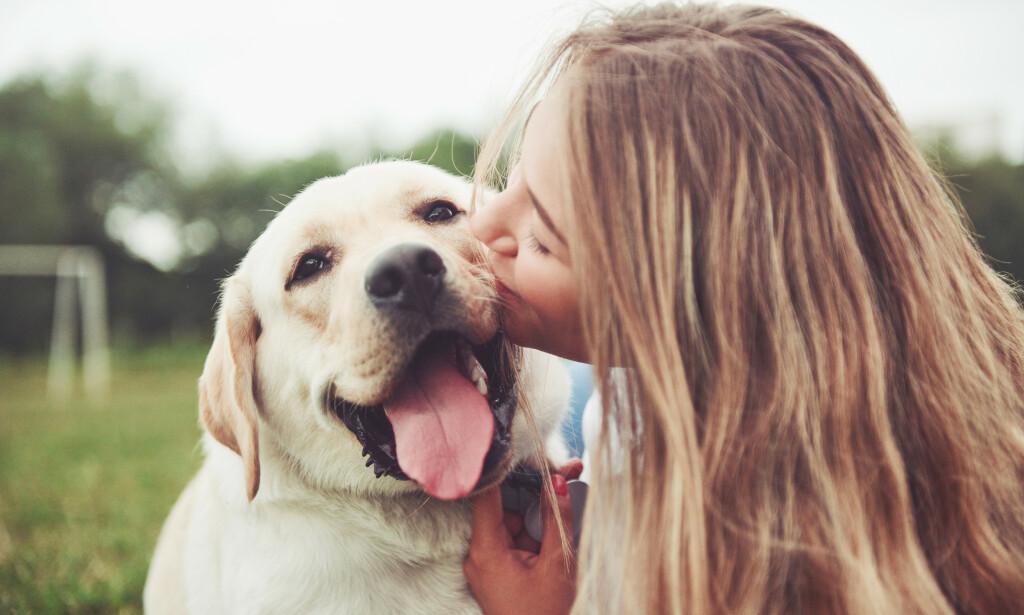 MENNESKETS BESTE VENN, OG LIVSFORLENGER? Noen forskere mener at det å eie hund, er bra for hjertehelsa. Foto: NTB Scanpix