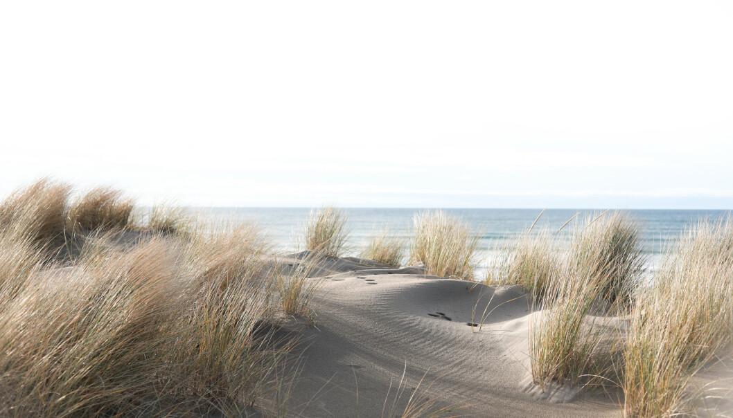 <strong>INSPIRERT AV NATUREN:</strong> Årets farge, ifølge Fargerike-kjeden, er inspirert av naturen, og særlig sand. FOTO: NTB Scanpix