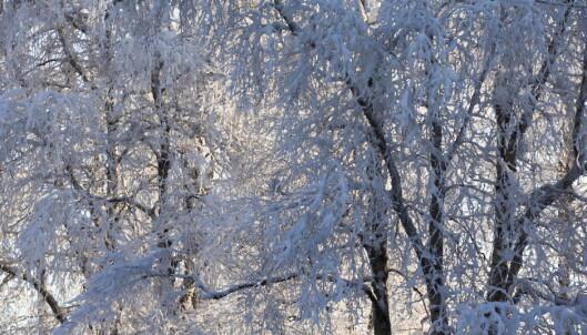 Nå blir det snø på Østlandet: - Kommer 10-15 cm