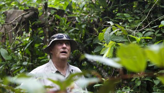 Full stans i norsk Amazonas-støtte