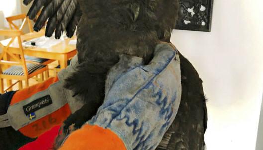 Ugle reddet ut av pipe på Nøtterøy