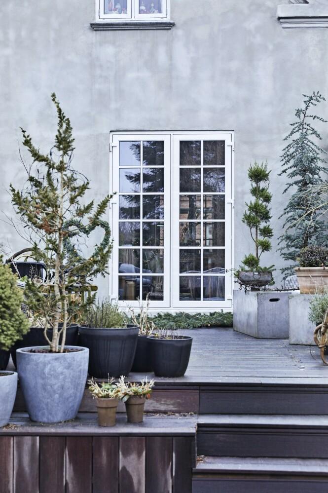 Ute pynter familien med store krukker med grønne planter og trær. FOTO: Dianna Nilsson
