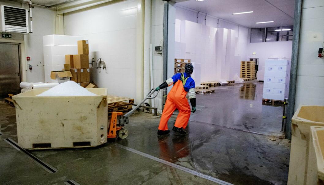 <strong>AVISER LOVBRUDD:</strong> Også det litauiske bemanningsbyrået, Skodita, mener at Arbeidstilsynet har tatt feil. Foto: Nina Hansen/Dagbladet