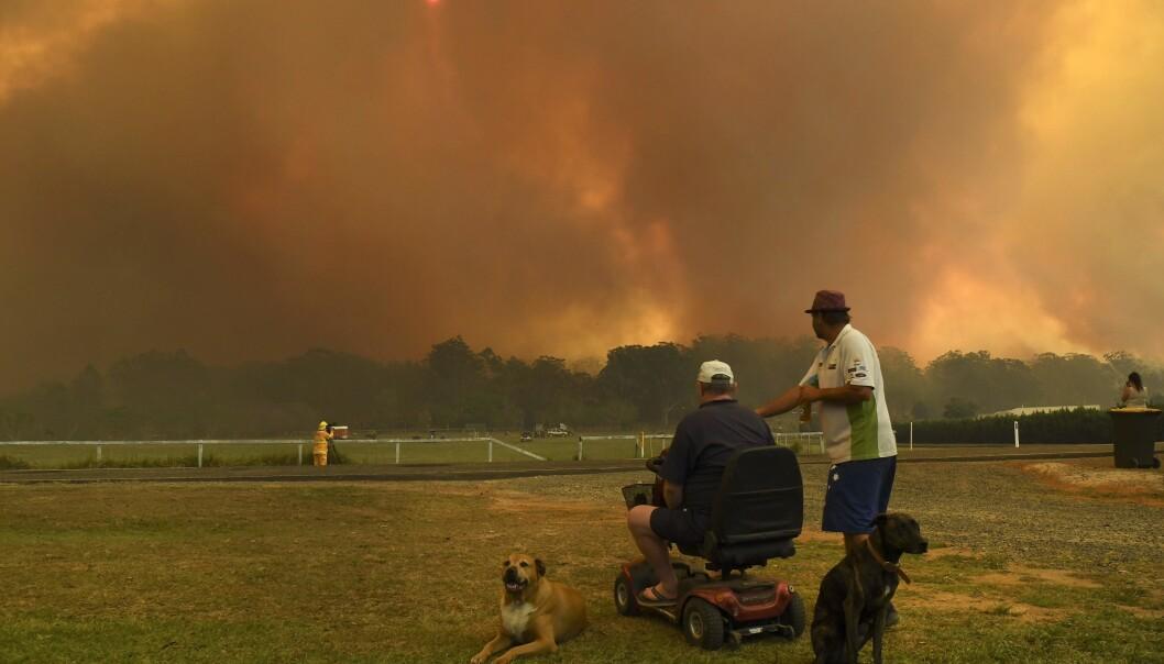RØYK: To personer følger skogbrannene litt nord for Sydney. Foto: William West/AFP