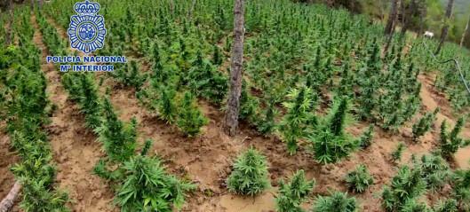 Fant marijuanaplantasjer dypt inne i skogen