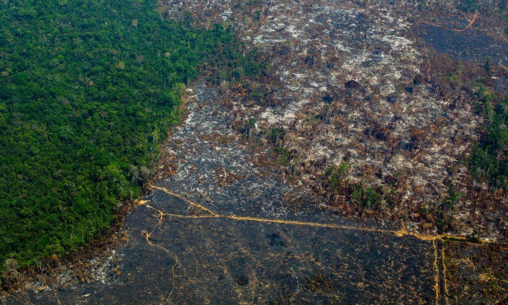 image: Rekordavskoging: - Vil endre kloden for alltid