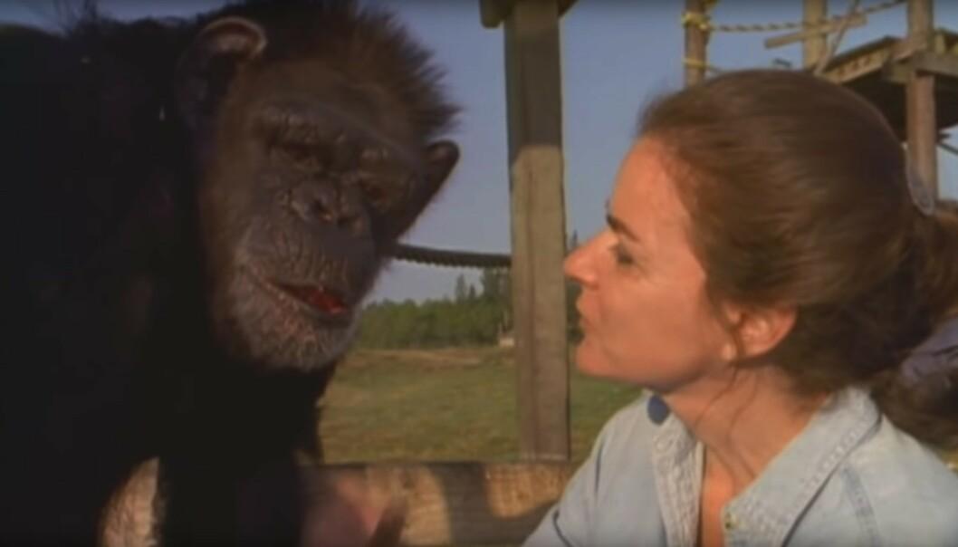 TANKEFULL: Swing lytter når Linda snakker om tiden de delte, og alle minnene fra den gang. FOTO: Skjermdump fra dokumentaren Wisdom of the wild/Argo films