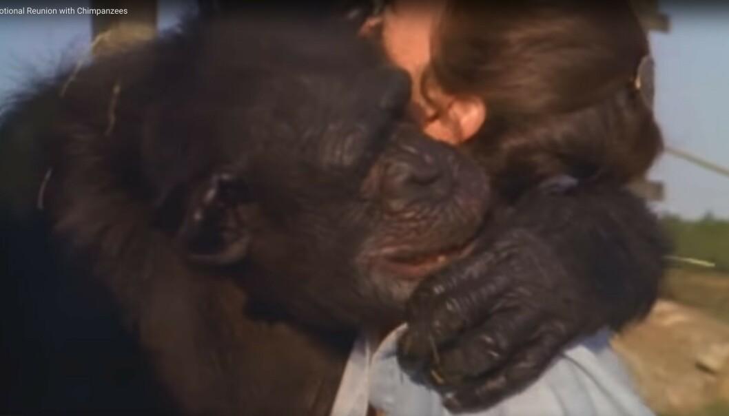 FØLELSELADET: Det var tydelig at Swing satte stor pris på gjensynet med Linda. FOTO: Skjermdump fra dokumentaren Wisdom of the wild/Argo films