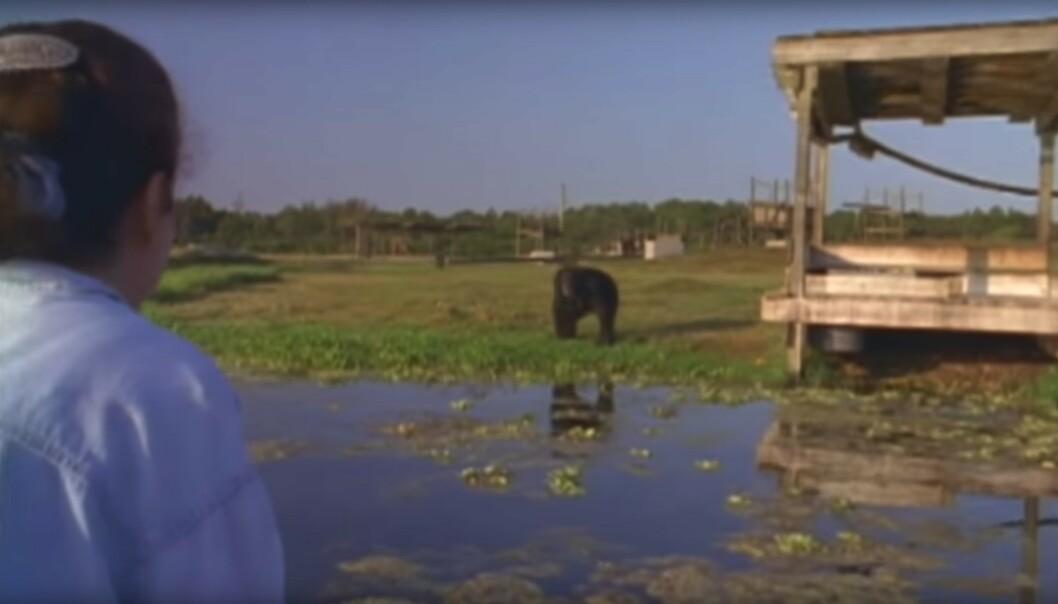 GJENSYN: LInda Koebner på vei til øya. Sjimpansen Swing står på bredden. Vil hun huske henne? FOTO: Skjermdump fra dokumentaren Wisdom of the wild/Argo films