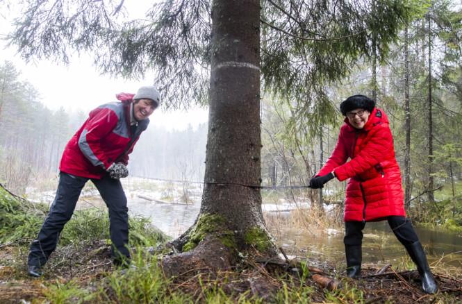BIDRO: Oslo-ordfører Marianne Borgen (t.v.) og Ruth Bush, som er borgermester i London-bydelen Westminster, bidro til å sage ned treet som skal stå på Trafalgar Square i London i julen. FOTO: NTB scanpix