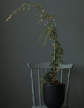 SEDERTRE: Et alternativt juletre. Foto: Mester Grønn.