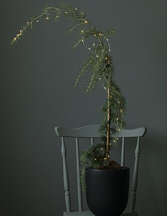<strong>SEDERTRE:</strong> Et alternativt juletre. Foto: Mester Grønn.