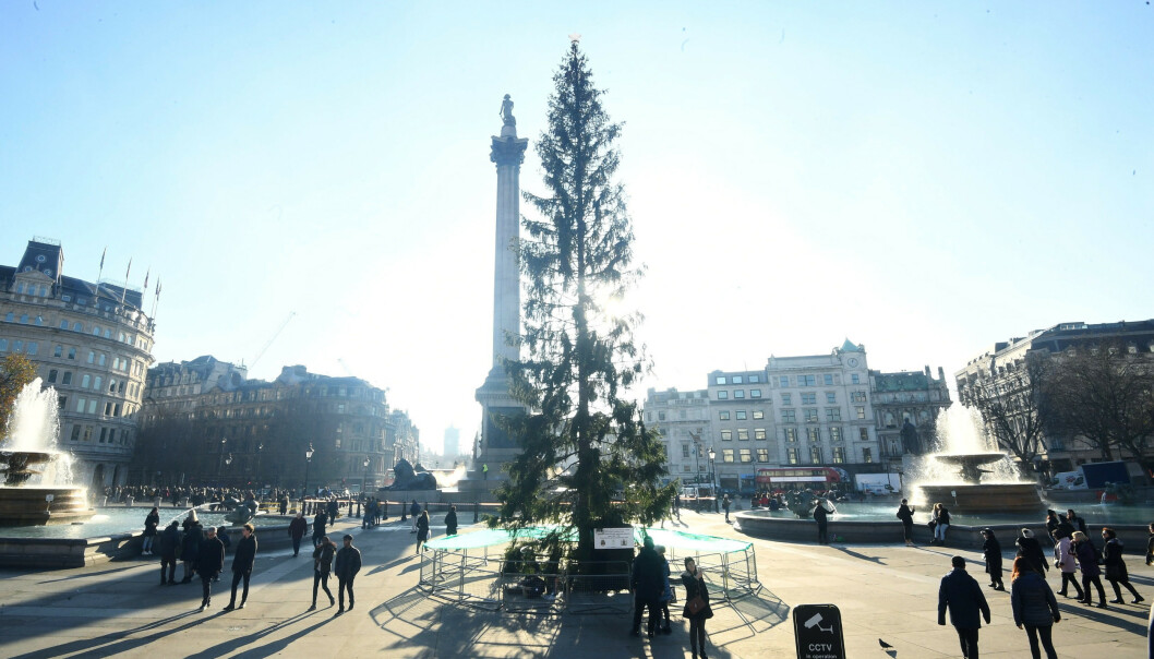 Britene er misfornøyd med juletreet på Trafalgar Square. Foto: Victoria Jones / PA via AP / NTB scanpix