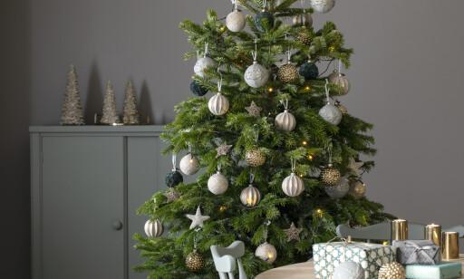 FRODIG: Mye vann og tilsatt næring i vannet, er to av nøkkelingrediensene for å holde juletreet frodig og grønt gjennom julen. Foto: Mester Grønn.