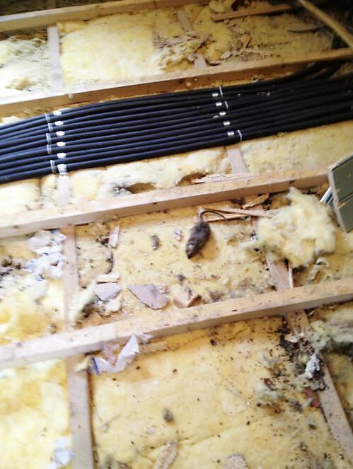 FIKK SJOKK:Da paret overtok huset, merket de en vond lukt. Og den stive stanken viste seg å skyldes et rotte-mekka under husets første etasje. Foto: Privat