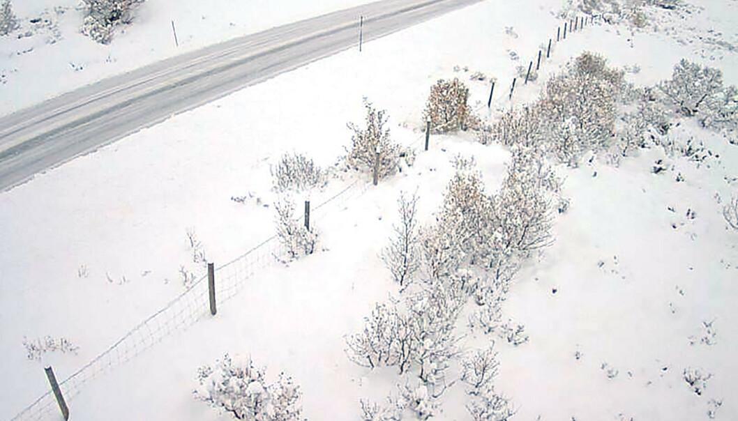 Flere fjelloverganger i Sør-Norge kan bli stengt på kort varsel. Noen er allerede stengt, og det er innført kolonnekjøring flere steder. Illustrasjonsfoto: Webkamera / Statens vegvesen / NTB scanpix.