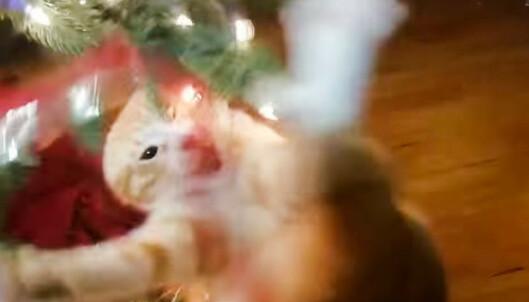 <strong>GØY!:</strong> Se sprø video av denne, og flere katter lenger ned i artikkelen. Skjermdump: Youtube.
