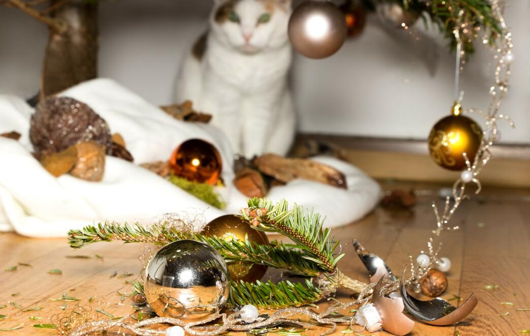 <strong>OI, DA:</strong> Det er nok ikke kattens intensjon å ødelegge husvertens julepynt - det er rett og slett kattens naturlige instinkt som styrer lekelysten. Foto: NTB Scanpix.