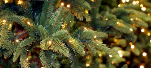 Derfor kan hodepinetabletter stoppe dryssing fra juletreet