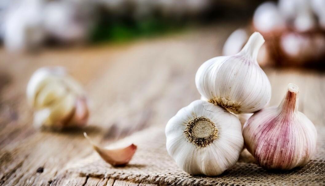 PÅVIRKER KROPPSLUKTEN: Hvitløk er en velkjent årsak til dårlig ånde, og kan også påvirke svettelukt. FOTO: Scanpix