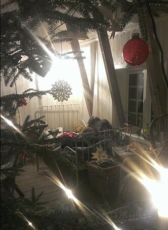 <strong>VÅR JUL:</strong> Tre unger foran én bok i samme seng på vår gamle, isolerte låve, sett gjennom selvhogget juletre. For meg er dette bildet av fullstendig julero. Foto: Birgitte Hoff Lysholm