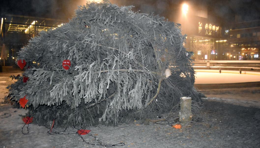 Julegrana på Stortorget på Hamar har i løpet av natten blitt saget ned. Foto: Lars Lillemork / Hamar Arbeiderblad / NTB scanpix.