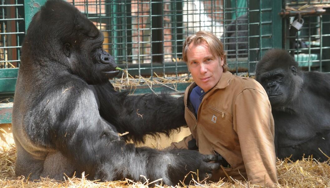 <strong>VIL LEGGE NED:</strong> Dyrehageeieren Damian Aspinall (59), her avbildet med gorillaen Kifu, mener alle verdens dyrehager bør legges ned. Foto: Murray Sanders / NTB Scanpix