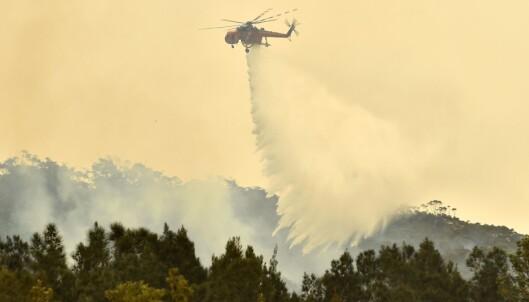 <strong>NASJONAL KRISE:</strong> Et helikopter dropper vann over Batemans Bay i New South Wales, der brannene nå herjer. I dag utførte myndighetene tvungen evakuering av innbyggere i området. Foto: Peter Parks / Afp / NTB Scanpix