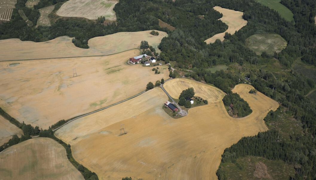 Tørke rammet avlingene til mange norske bønder sommeren 2018. Illustrasjonsfoto: Berit Roald / NTB scanpix