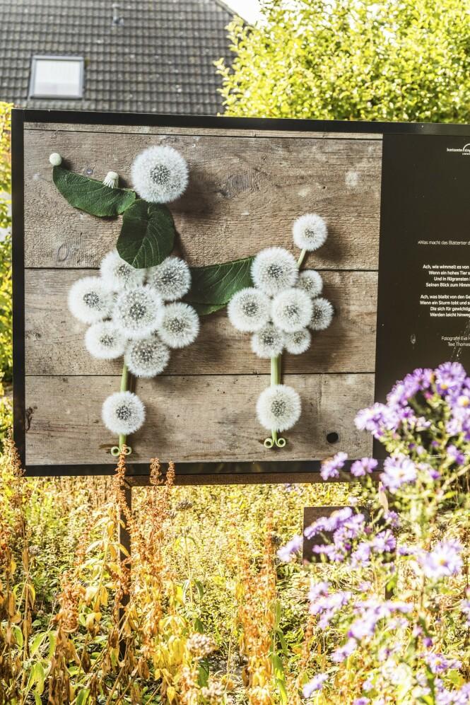 Bilde fra urtehagen til Museumshof Zingst. FOTO: Mikkel Bækgaard