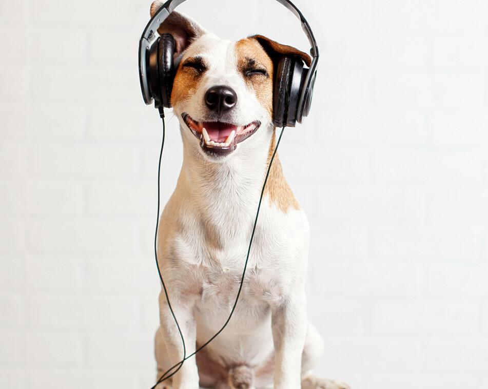 DYREMUSIKK: Spillelister basert på dine egne preferanser, samt hva som er gunstig for en hund eller katt, er nå lansert av musikkstrømmetjenesten Spotify. FOTO: NTB Scanpix