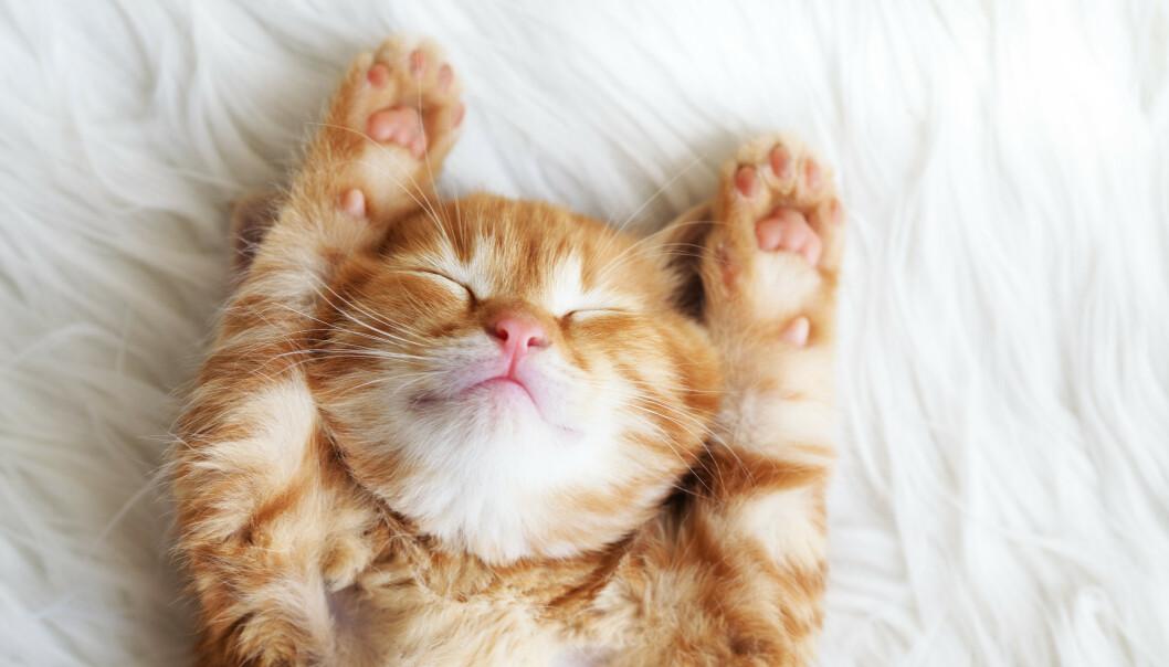 CHILL OUT: Kanskje trenger den urolige katten rett og slett litt avslappende musikk? FOTO: NTB Scanpix