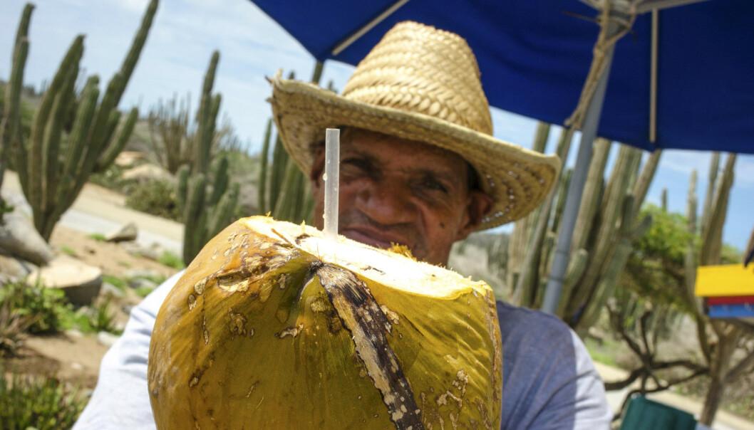 <strong>NØTT PÅ VEIEN:</strong> En fersk kokosnøttdrink kan du få flere steder langs veiene i Aruba. FOTO: Jörgen Ulvsgärd/TT