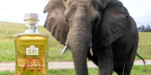 image: Lager gin med elefantbæsj