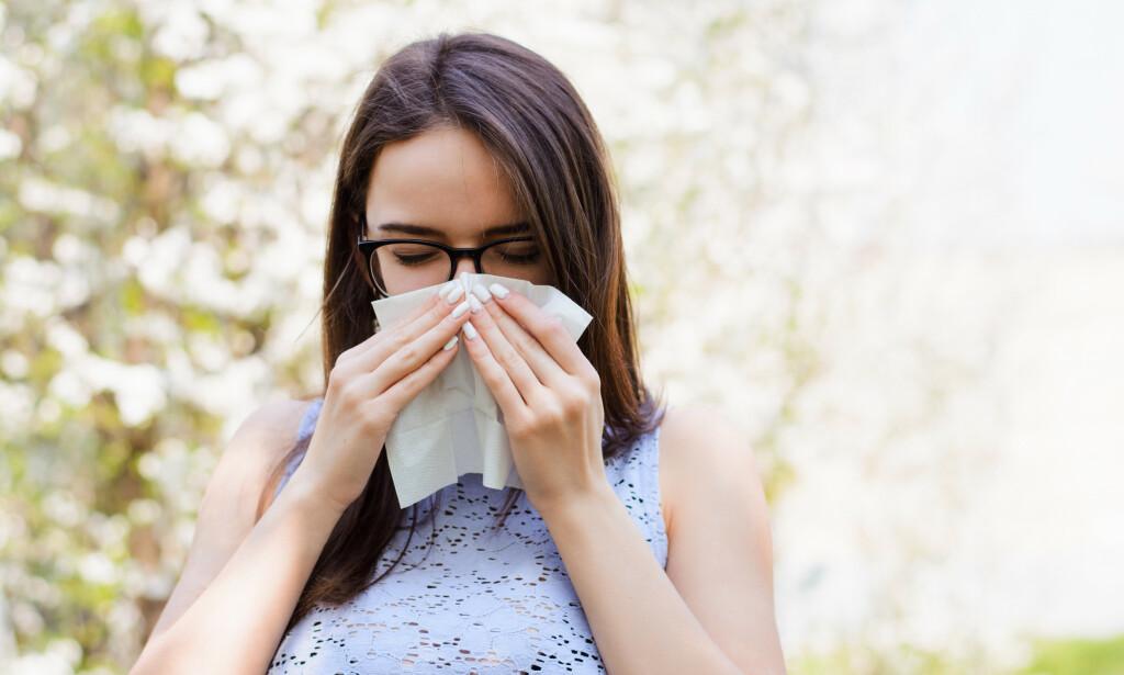 POLLENALLERGI: Ny behandling mot pollen har kommet på blå resept. Foto: Shutterstock/NTB Scanpix